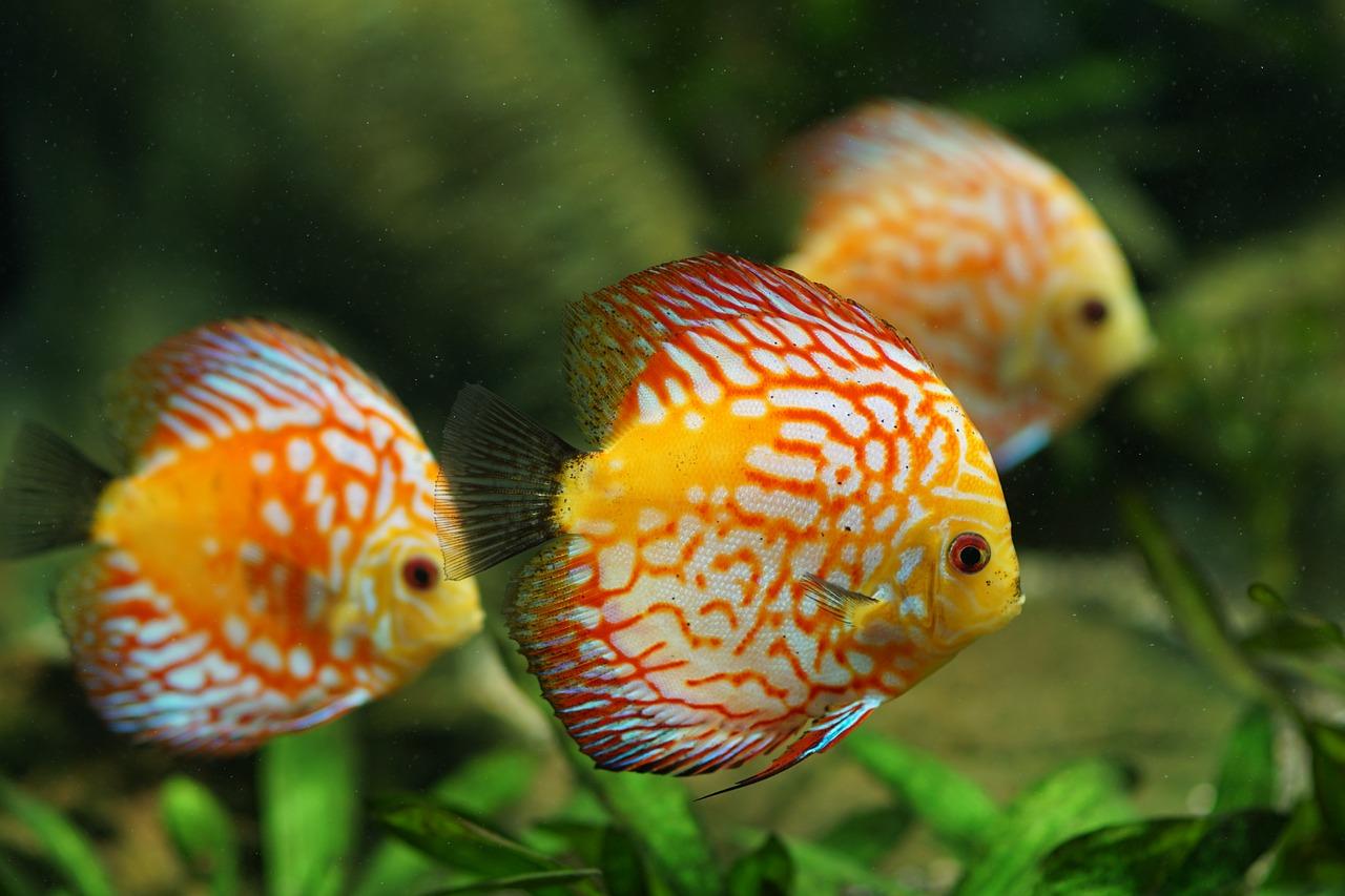 Luxus Aquarium
