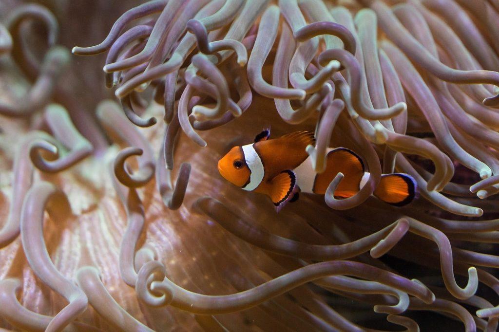 Luxus Aquarium kaufen